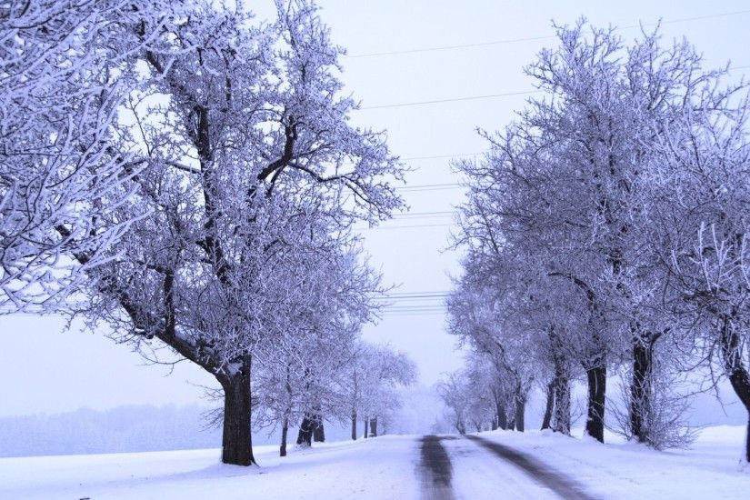 Tonemapped Tag - Cold Avenue Tree Winter Tonemapped Wallpaper Android for  HD 16:9 High