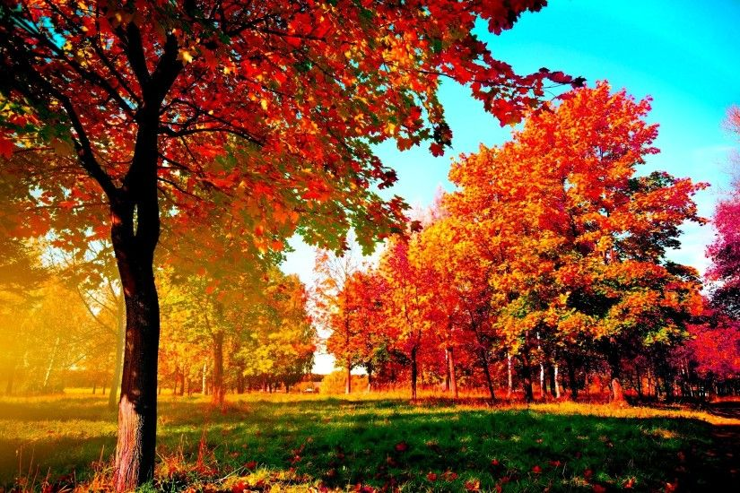 Autumn-trees Wide Desktop Background