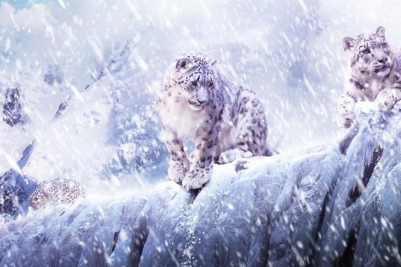 nature, Animals, Leopard, Snow Leopards, Snow Wallpapers HD / Desktop and  Mobile Backgrounds