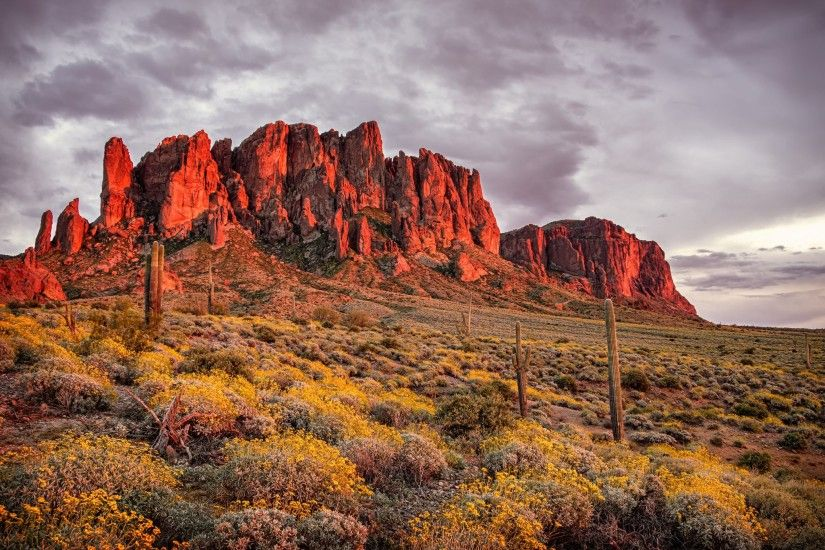 mountains, desert, flowers, cactus, apache, junction, state, of, arizona,  superstition, mountains Wallpaper HD