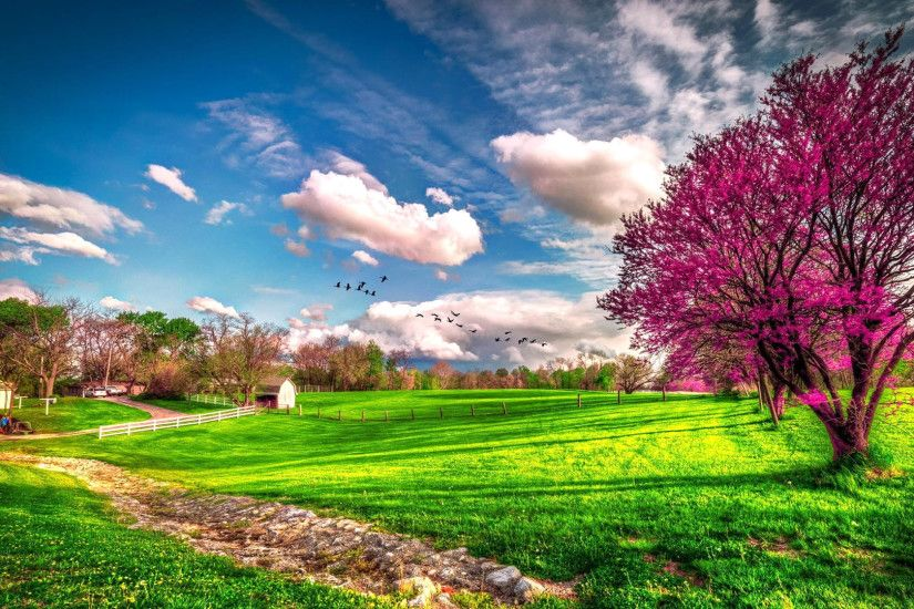 Photography - Landscape Earth Spring Field Tree Blossom House Grass  Wallpaper