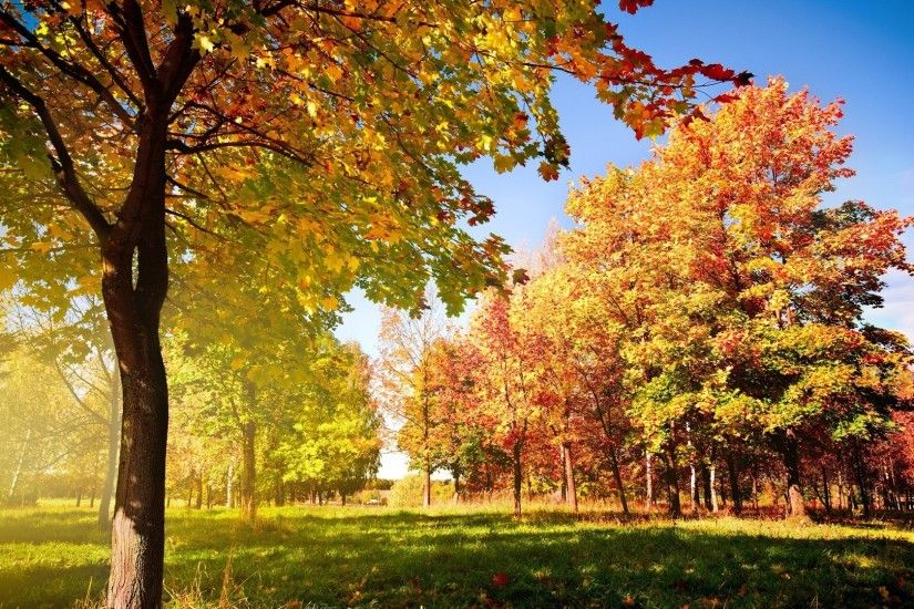 Widescreen, autumn, wallpaper, trees, background, mac (#220440)
