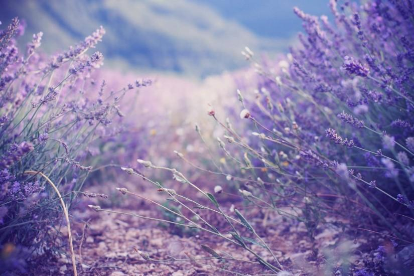 widescreen lavender background 1920x1200 image