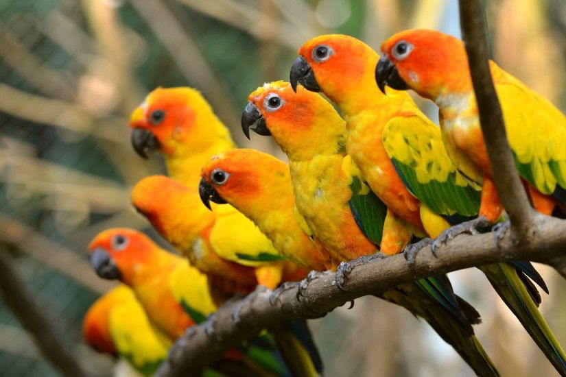 Beautiful Parrot Wallpaper