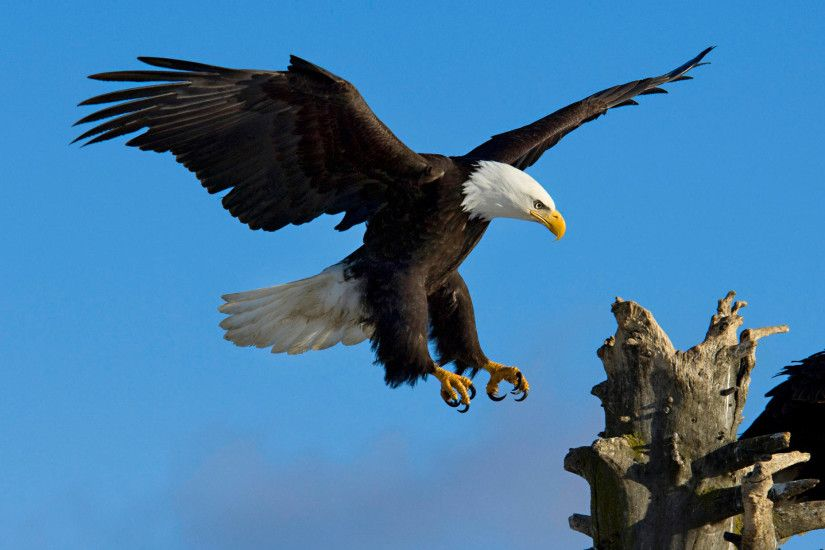 desktop hd image of flying eagle