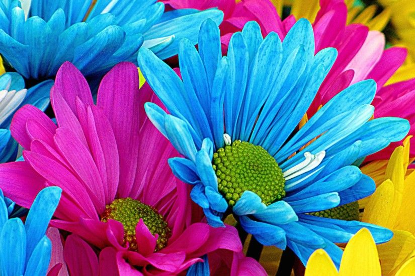Colorful Flower HD Wide Wallpaper for Widescreen (51 Wallpapers)