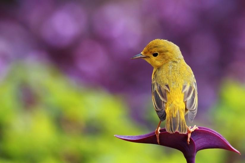 Little Bird - 1080p HD Wallpaper Widescreen | HD Wallpapers Source