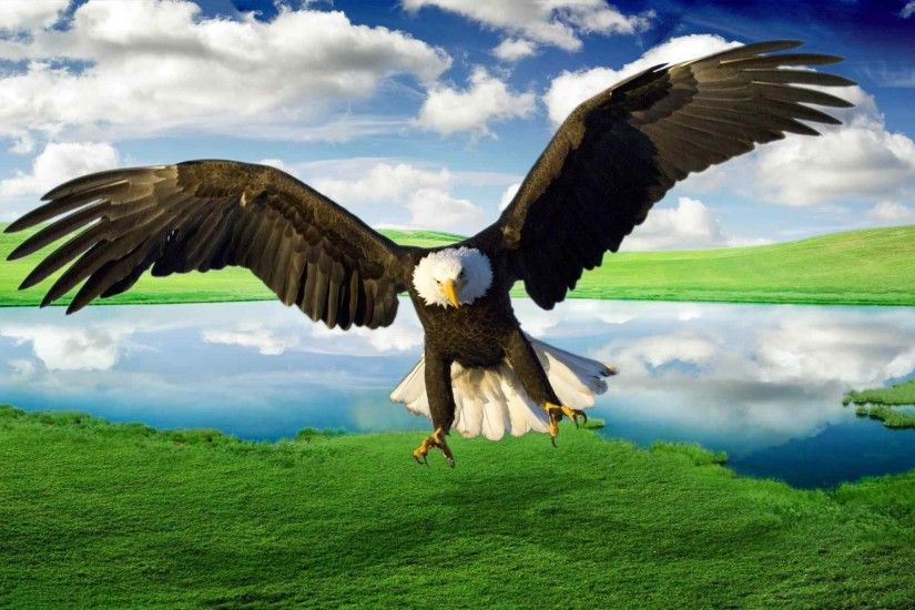 Flying Eagle Wallpapers - Wallpaper Cave ...