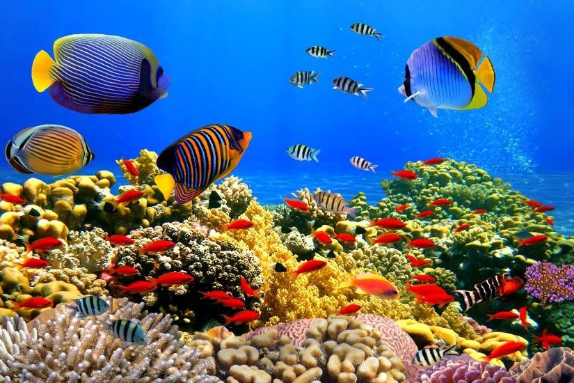 Underwater Wallpaper Download Free.