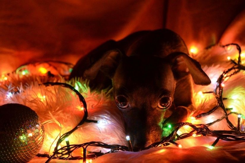 Related Wallpapers. Christmas Puppy