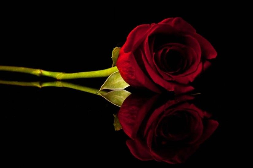 1920x1200 1920x1200 Wallpapers Backgrounds - 1920x1440 Wallpapers Flowers  Roses Black Background Red