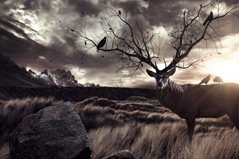 free download deer wallpaper 1920x1080 for tablet