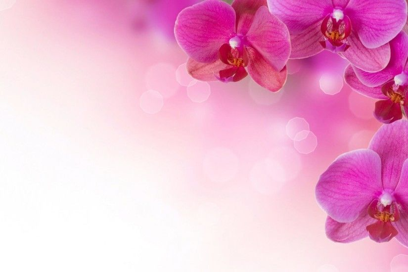 Wallpapers For > Pink Flower Background Design