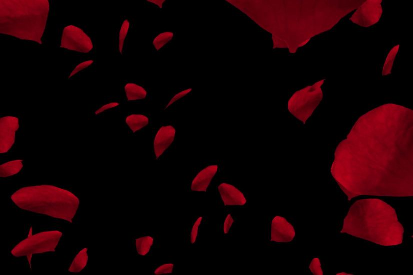Falling red rose petals. Valentine slow motion HD animation, close up with black  background