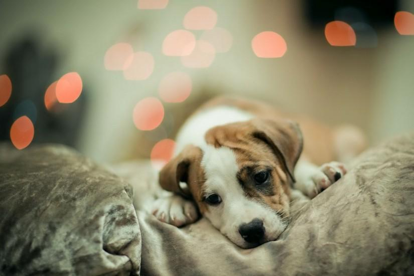 Cute Dog Wallpapers - About Doggies