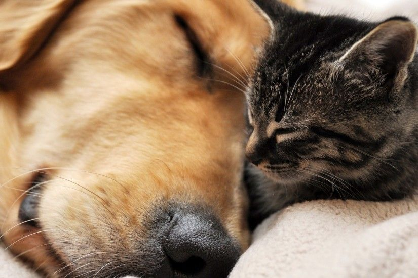 Dog and cats together - photo#2