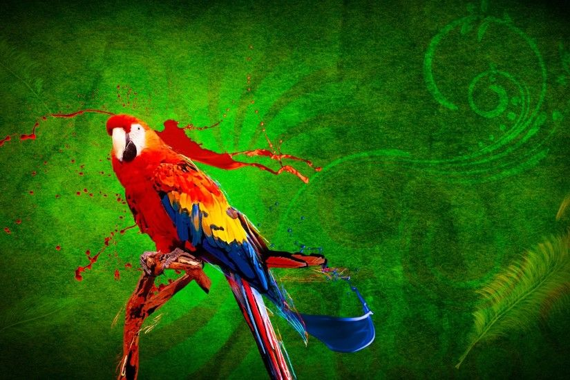 parrot hd 1080p desktop wallpaper 0012