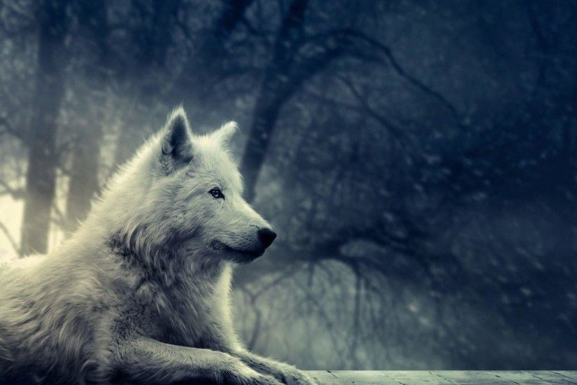 Wallpapers For > White Wolf Wallpaper Hd