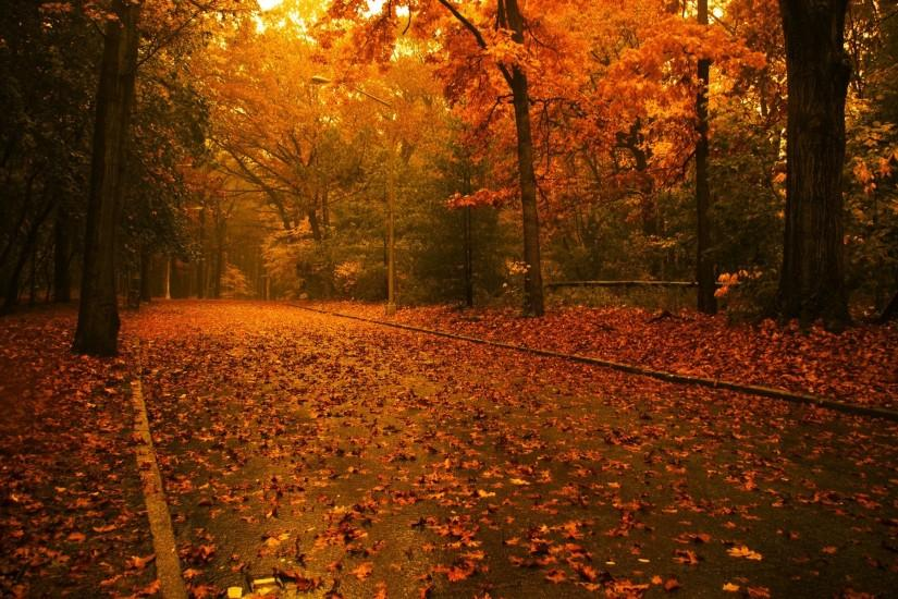 fall wallpaper 1920x1200 download free
