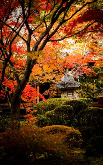 ... 1600×2560 · desktop background image of a fall-foliage garden scene ...