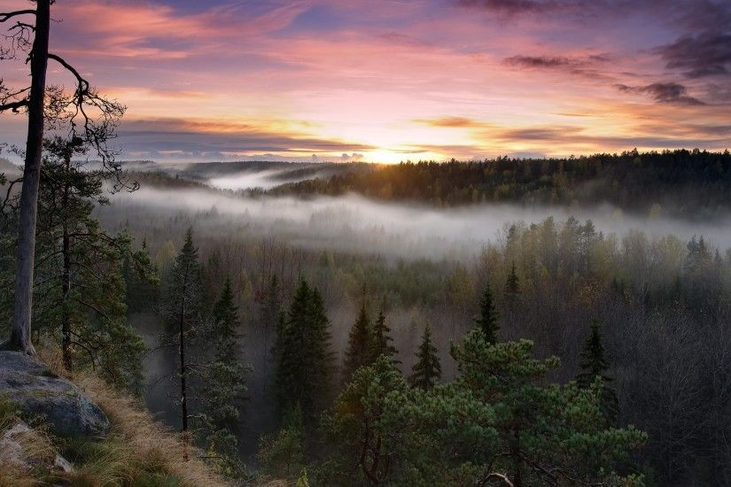 nature, Landscape, Sunrise, Forest, Mist, Fall, Sky, Clouds, Trees, Finland  Wallpapers HD / Desktop and Mobile Backgrounds