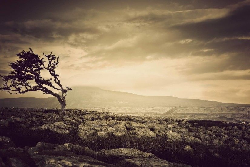 Tree Sepia wallpapers | Tree Sepia stock photos