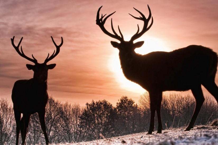 download deer wallpaper 1920x1080 for mac