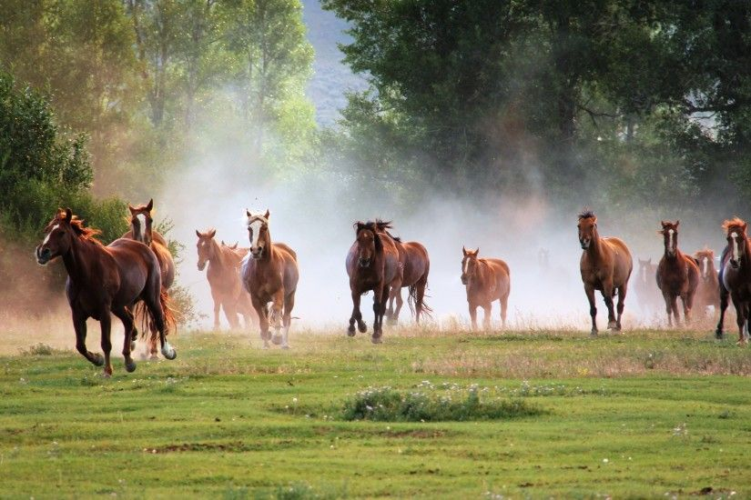 running-horse-wallpaper-full-hd-130.jpg