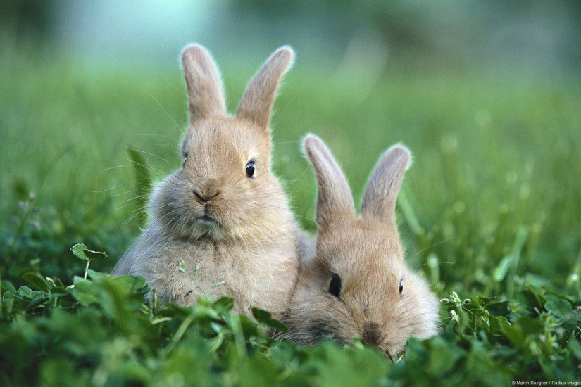 Bunnies Wallpapers Group (76 ) Cute ...