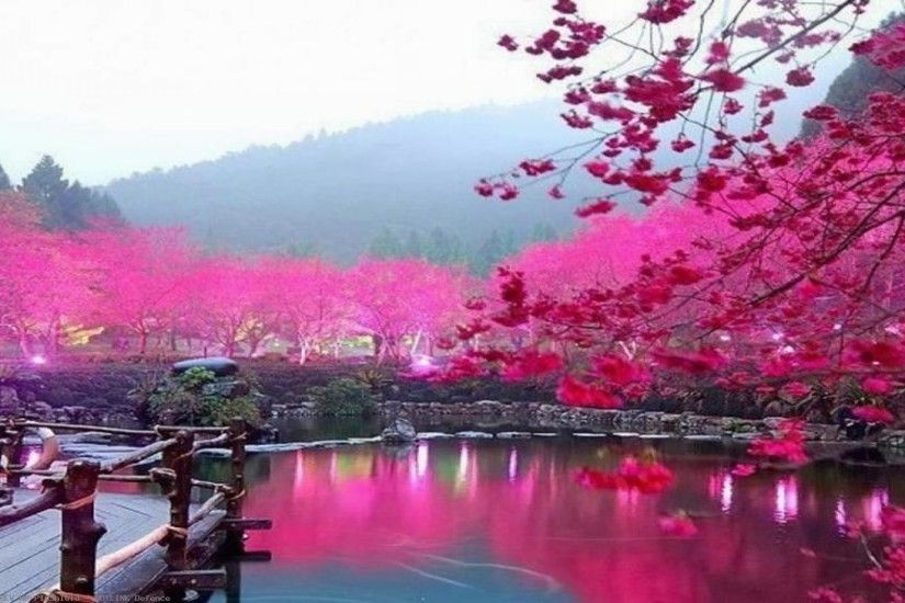 Japanese-Cherry-Blossom-Garden-Phone-for-HD-Desktop-