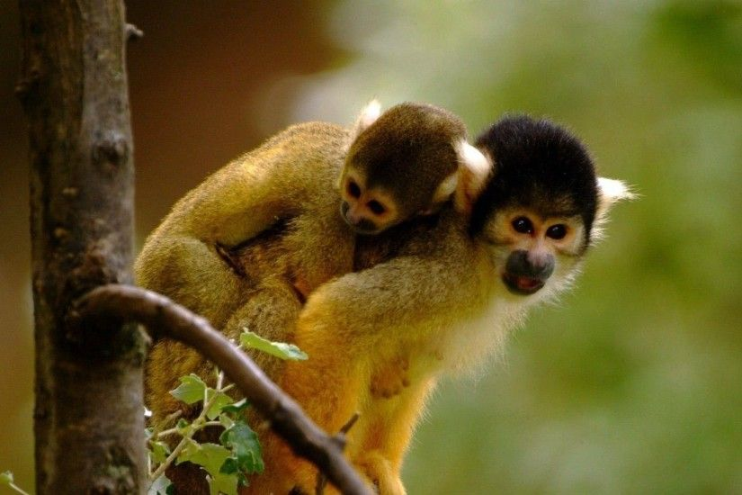 Cute monkeys wallpaper