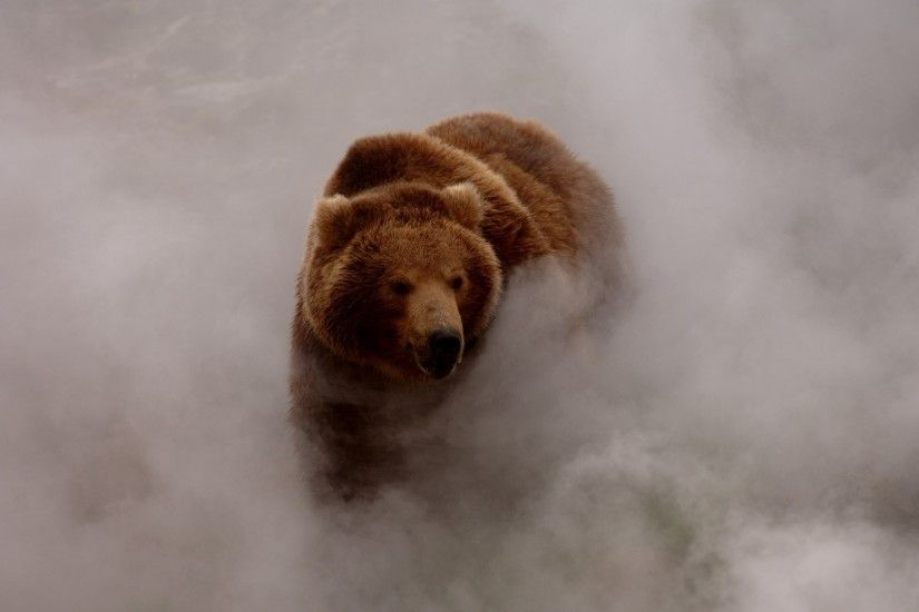 nature, Animals, Bears, Smoke, Dust, Grizzly Bear, Wildlife Wallpaper HD