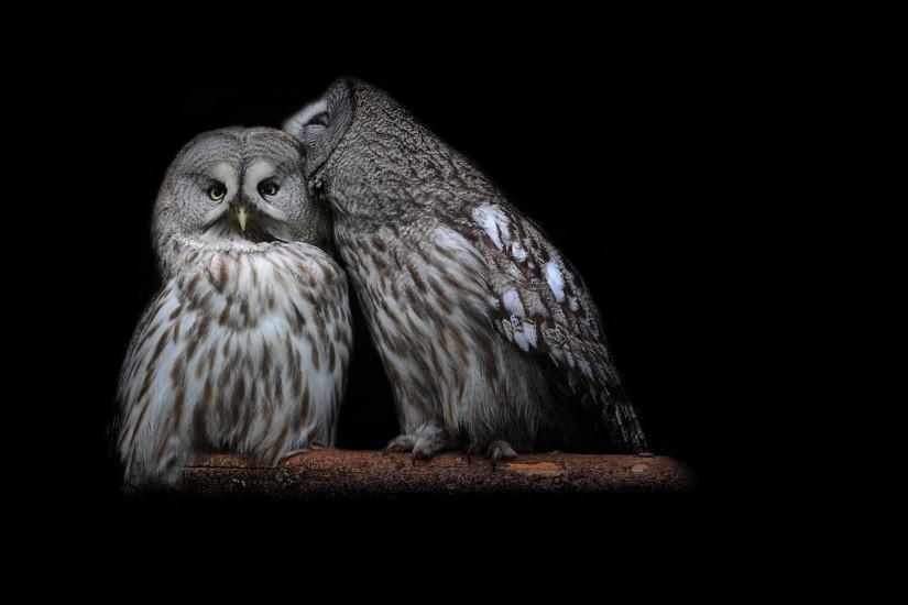 859 Birds / Owls HD Wallpapers | Backgrounds - Wallpaper Abyss - Page 8