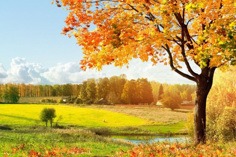 AMB Wallpapers provides you the latest Autumn Tree Wallpaper. We update the  latest collection of Autumn Tree Wallpaper on daily basis only for you.