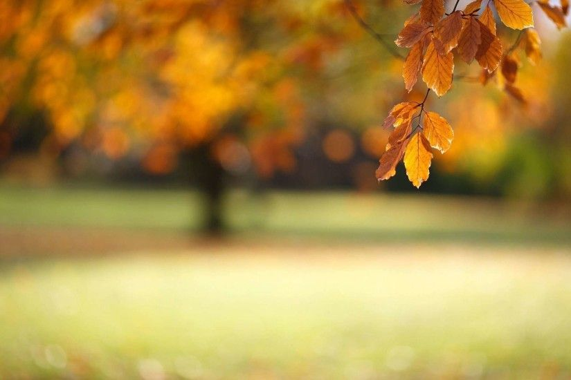 Autumn Leaves Wallpapers High Quality Resolution