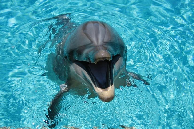 Preview wallpaper dolphin, smiling, water, pool 1920x1080