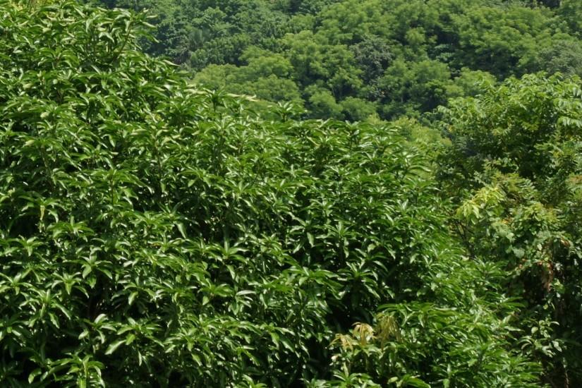 jungle background 1920x1200 free download