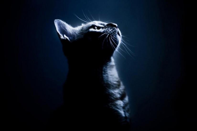 ... black-cat-desktop-wallpaper ...