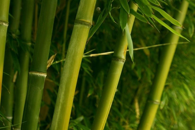 free bamboo background 1920x1080