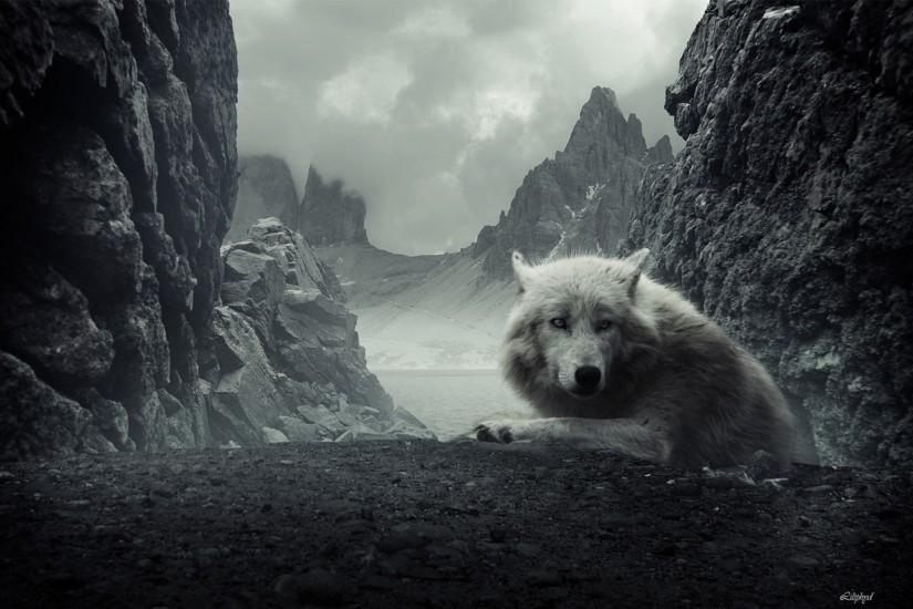 top wolf backgrounds 2560x1600
