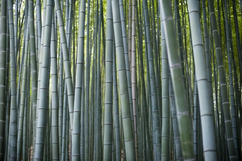 gorgerous bamboo background 3200x2129 smartphone