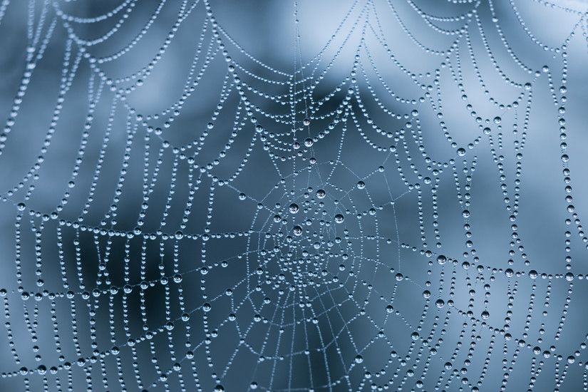 spiderweb wallpapers with water drops and ice hd wallpapers
