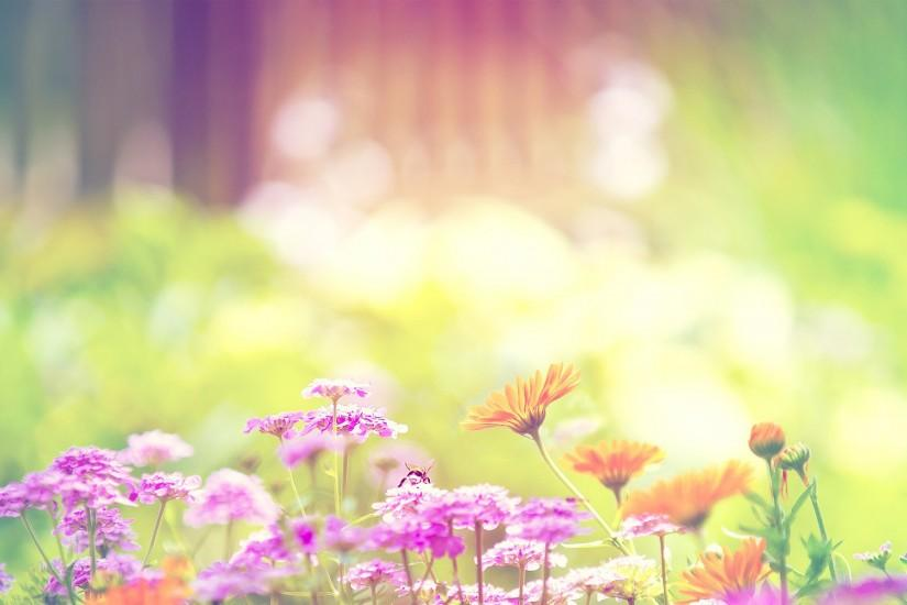 amazing flowers background 1920x1200