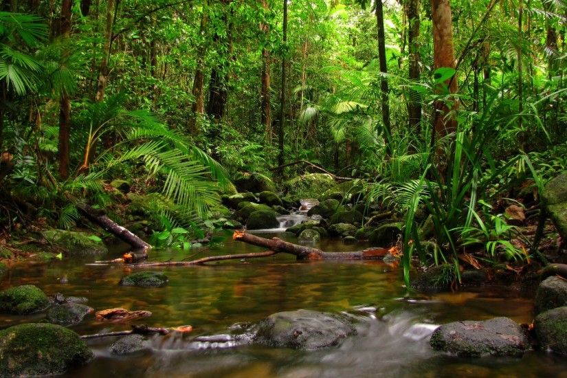 Most Beautiful Rain forest Wallpapers