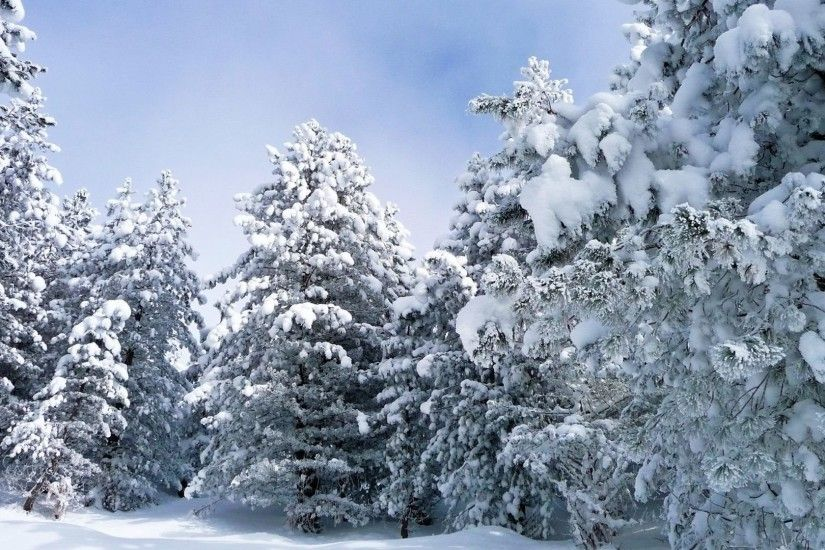 Nature Forest Landscape Trees Winter Tree New Background Images - 1920x1200
