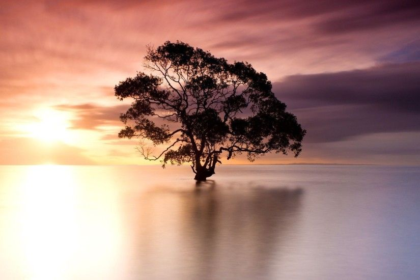 Tree in Nudgee Beach, Australia wallpaper