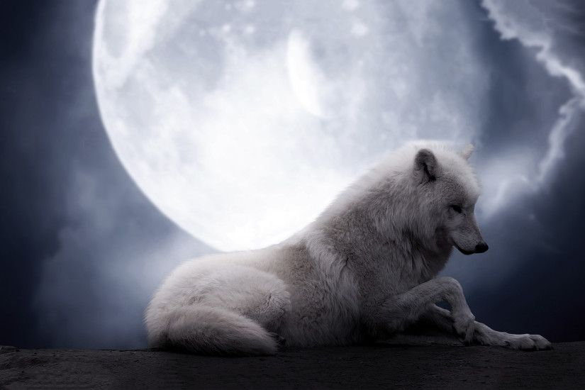 White Wolf Howling at the moon wallpaper