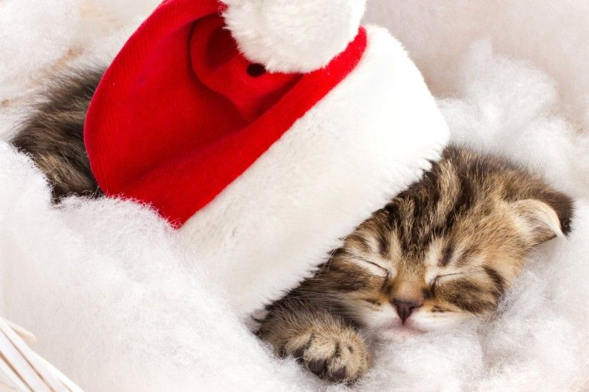 cat kitten striped sleeping hat red christmas holidays winter