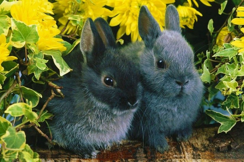 Free Beautiful Rabbit Pictures Desktop Rabbit Hd Wallpapers Fullscreen  Download