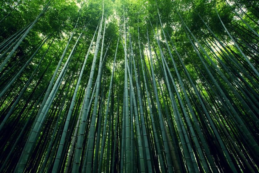 cool bamboo wallpaper 2560x1600